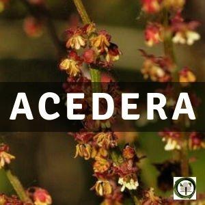 Acedera, Planta Medicinal