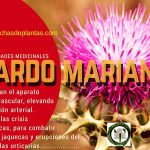 Cardo Mariano