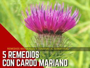 Cardo Mariano Remedios