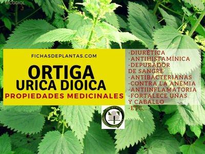 Ortiga Propiedades Medicinales
