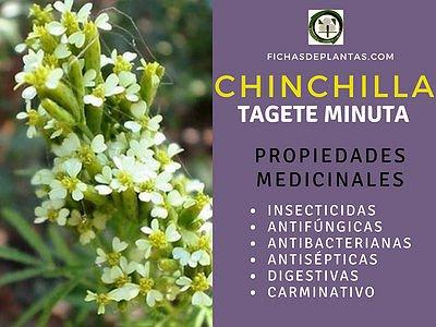 Chinchilla, Propiedades Medicinales