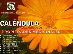 Maravilla o Calendula, Propiedades:  Emenagogas, Antiinflamatorias, Antisépticas, Cicatrizantes, Digestivas, Antibacterianas, Antiviral