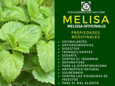 Melisa Propiedades Medicinales