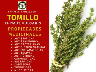 Tomillo Propiedades Medicinales