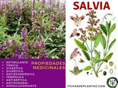 Salvia, Propiedades Medicinales