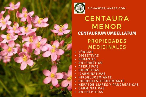 Centaura Menor, Propiedades Medicinales