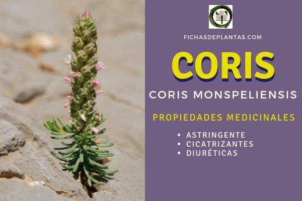 Coris monspeliensis, Propiedades
