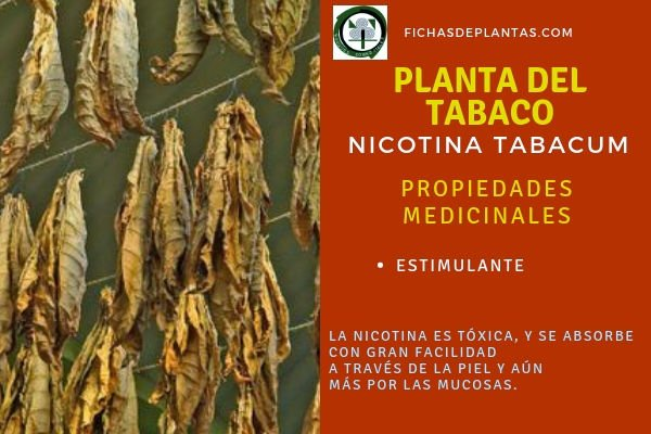 Tabaco Propiedades Medicinales