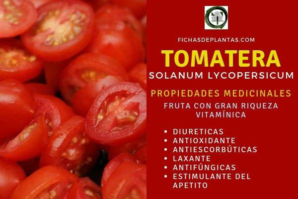 Tomatera, Propiedades del Tomate