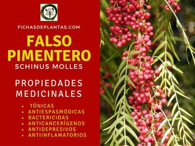 Falso Pimentero, Propiedades Medicinales