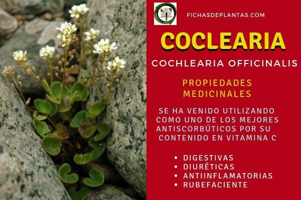 Cochlearia officinalis Propiedades