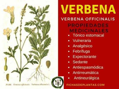 Verbena Propiedades Medicinales