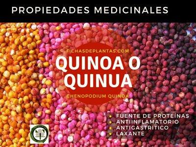 Quinoa Propiedades Medicinales