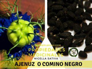 Comino negro o Ajenuz, Propiedades Medicinales