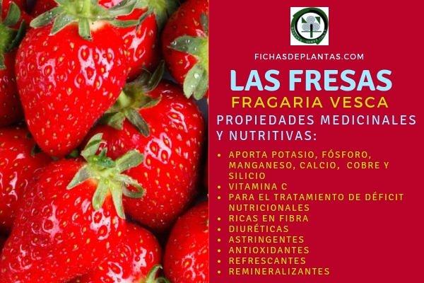 Fresas Propiedades Medicinales