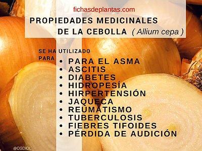 La Cebolla | DESCRIPCIÓN Y PROPIEDADES MEDICINALES