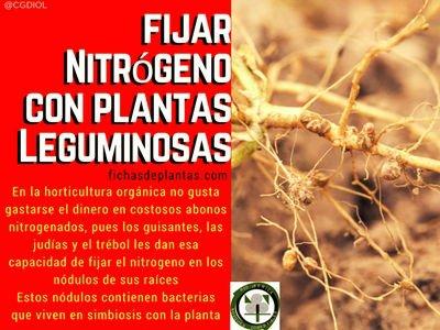 fijar-nitrógeno-con-plantas-leguminosas