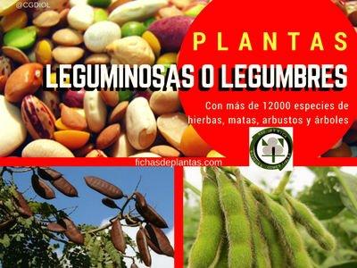 Leguminosas o Legumbres | Índice de Plantas