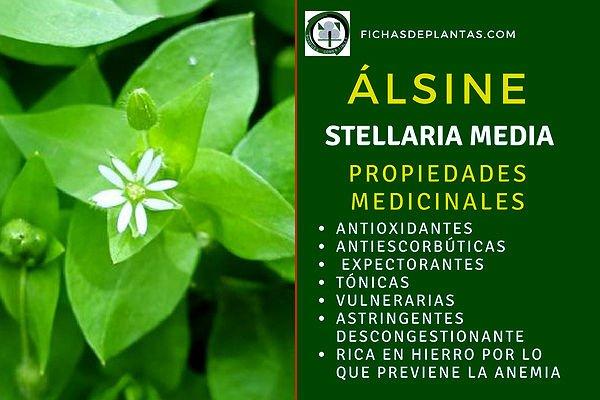 Álsine, Propiedades Medicinales