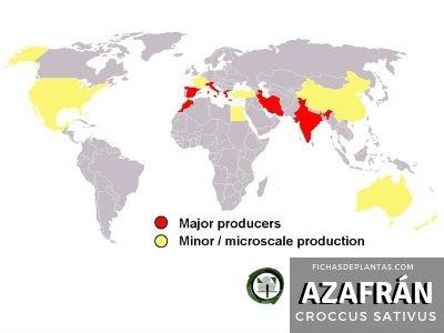 Azafrán Producción