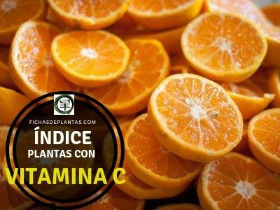 Plantas con Vitamina C