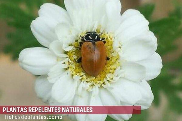 Planta que Atraen a los Insectos