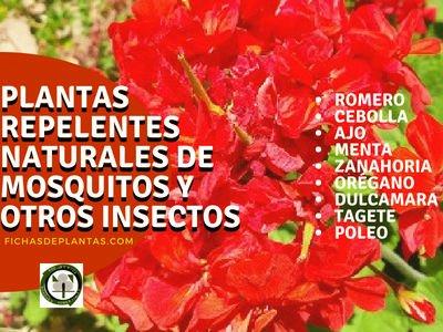 Plantas Repelentes de Mosquitos y otros Insectos