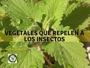 Vegetales que Repelen a los Insectos