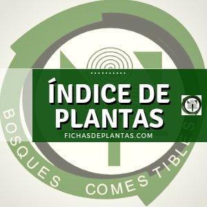 Indice de Plantas.