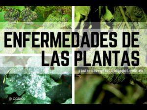 Lista de enfermedades, Fichas de Plantas