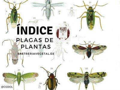 Lista de Plagas en Plantas, Fichas de Plantas