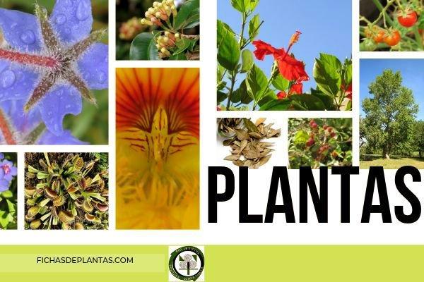 Plantas, todas las Imágenes