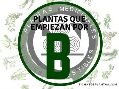 Plantas que empiezan por B