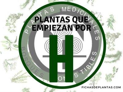 Plantas que empiezan por H