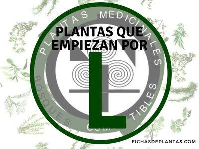 Plantas que empiezan por L