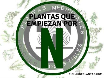 Plantas que Empiezan con N | ÍNDICE DE PLANTAS