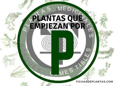 Plantas que empiezan por P