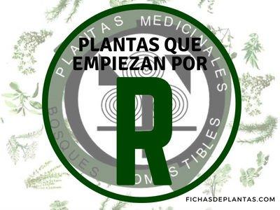 Plantas que empiezan por R