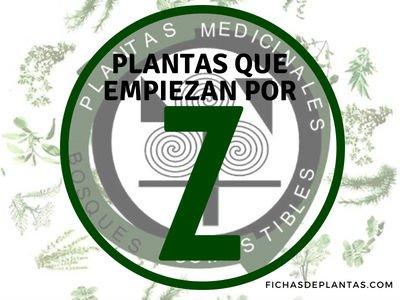 Plantas que empiezan por Z