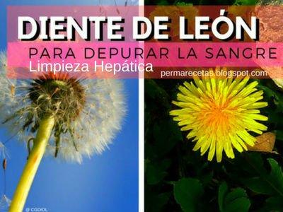 Diente León para el Hígado