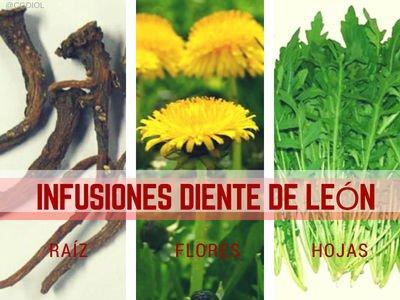 Diente de León Infusiones