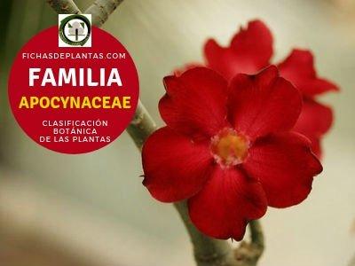 Familia Apocináceas | Clasificación Botánica de las Plantas