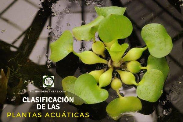 Plantas Acuáticas y su Clasificación.
