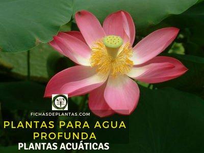 Plantas para Agua Profunda