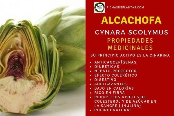 Alcachofas Propiedades Medicinales