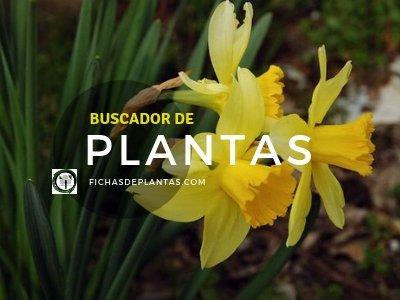 Buscador de Plantas, fichasdeplantas.es