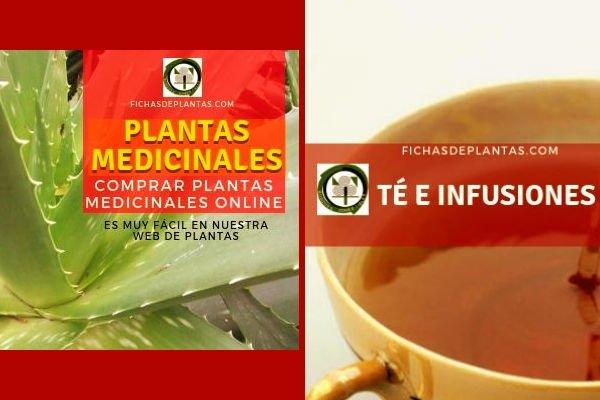Comprar Planta Medicinal,