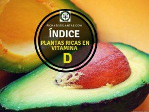 Plantas Ricas en Vitamina D