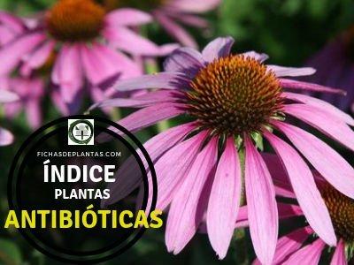 Lista de Plantas Antibióticas.