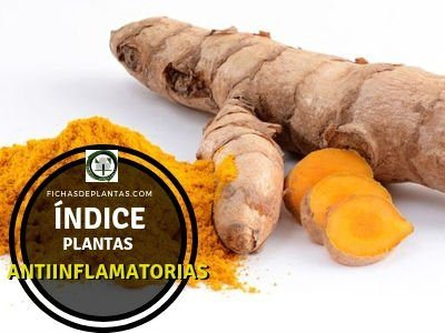 Plantas como Antiinflamatorio Natural